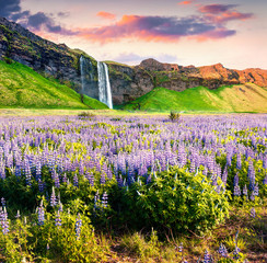 Picturesque morning view of Seljalandfoss Waterfall on Seljalandsa river.