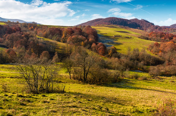 mountainous rural area in late autumn. trees with reddish foliage on green grassy hills. lovely weather on sunny day