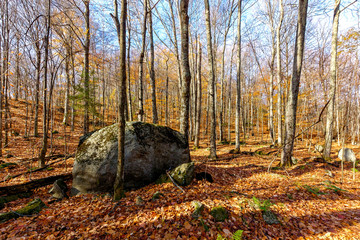 View of a forest with rock in late fall