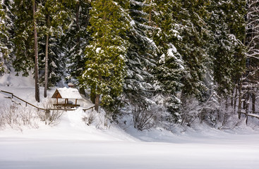 alcove in snowy spruce forest. lovely winter scenery