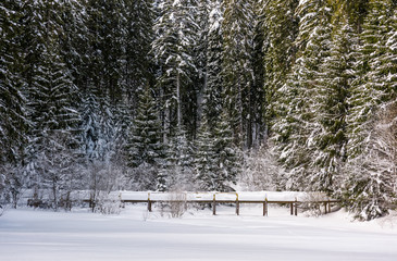 wooden bridge in snowy spruce forest. lovely winter scenery