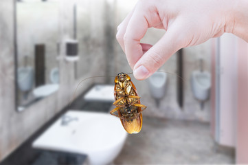 Hand holding cockroach on toilet background, eliminate cockroach in toilet