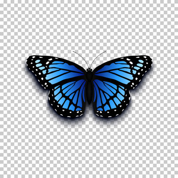 Realistic butterfly icon.