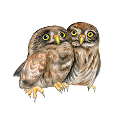 Owls. Owlet are hugging. Lovely chicks isolated on white background. Watercolor. Illustration. Picture.