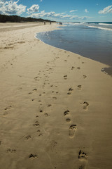 Parrarel humans and dogs footprints on the wet sand on Gold Coast beach in Australia.