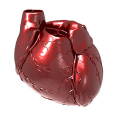 Human Body Organs (Heart Anatomy)