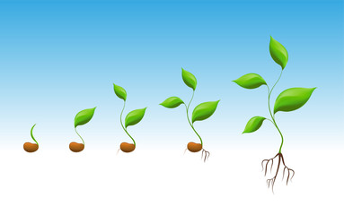 Phases of greenery germination and cultivation