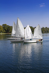 Deurstickers Zeilen Sports sailing in Lots of Small white boats on the lake