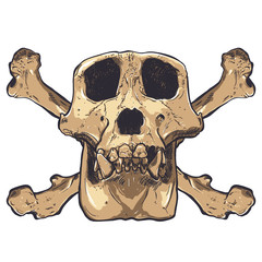 Illustration of a Monkey Skull on background. Vector.