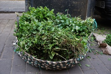 moroccan mint selling on market