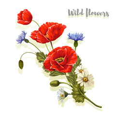 Composition with poppies and chamomiles. Vector illustration.