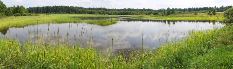 Panoramic view of a pond with green banks, overgrown with reeds and other near-water plants. A shallow lake in summer day