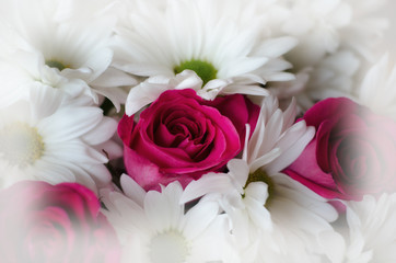 Beautiful flower bouquet with pink roses and white daisies.