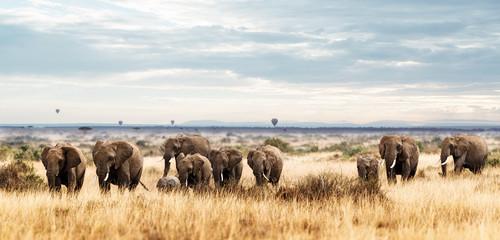 Herd of Elephant in Kenya Africa