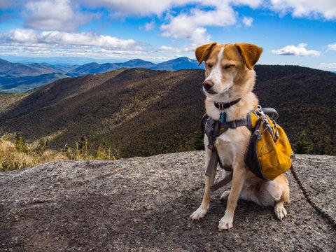 Adventure Dog on Mountain Summit, Eyes Closed