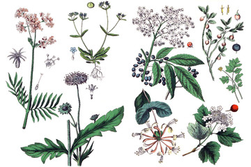 Illustrations of plants.