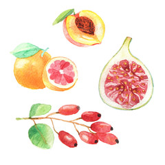 Hand dawn set with watercolor fruits, fresh food, peach, gojiberry, grapefruit, fig