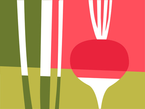 Abstract vegetable design in flat cut out style. Red and pink radish and stems. Vector illustration.