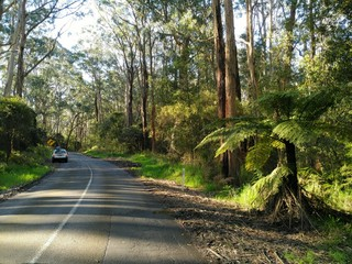 Jungle Road trip