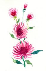 Watercolor wild flower