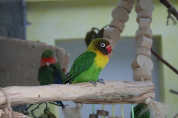 Wild parrot bird.