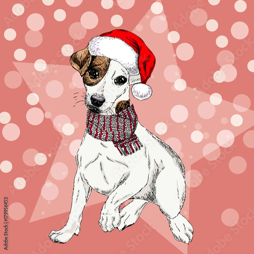 547ab3e0b471d Vector portrait of Jack russel terrier dog wearing santa hat and scarf.  Isolated on star and sparkle lights. Sketched color illustration.