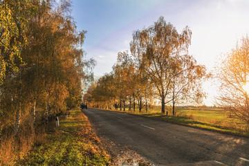 Empty autumn road along golden winter wheat fields at sunset
