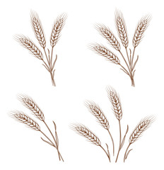 hand drawn wheat ears and sheaves