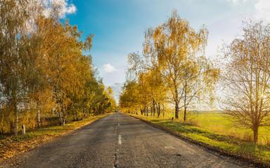 Autumn road along winter wheat fields