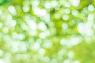 Nature blur greenery bokeh leaf wallpaper. spring and autumn park background; Soft focus light on view leaves flare.