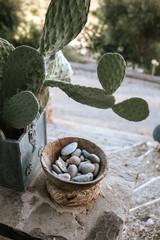 Kaktus und Steine