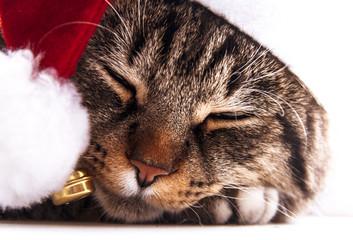 Cute cat in santa's cap. Santa's dressed cat.