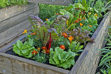 Photo sur Plexiglas Jardin A raised bed of vegetables and flowers in a urban garden