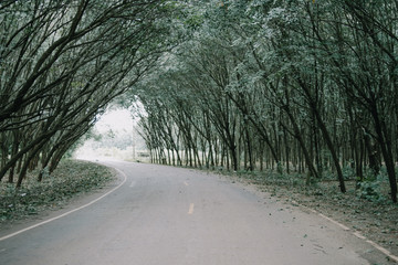Road with tree tunnel