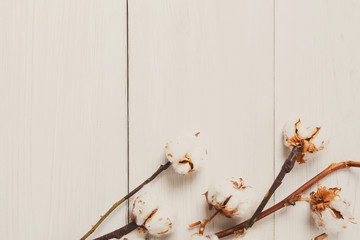 Dried cotton flower background on white wood, Top view.