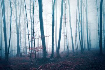 Fototapeten Wald Fantasy dark blue red colored foggy forest tree landscape. Color filter effect used.
