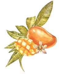 Set of Watercolor botanical illustration. Mango Fruit and flowers isolated on white background.