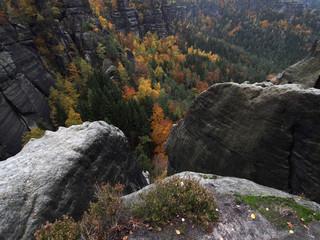 Herbstfärbung im Elbsandsteingebirge