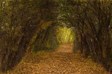 Pano Naturpark Bislicher Insel Bei Xanten Im Herbst Buy This Stock