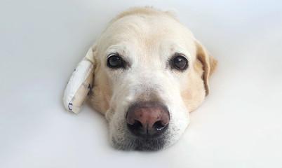 Close up dog wearing an elizabethan collar