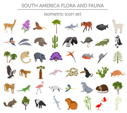 Isometric 3d South America flora and fauna elements. Animals, birds and sea life. Build your own geography infographics collection