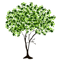 Tree isolated on white background, Vector illustration