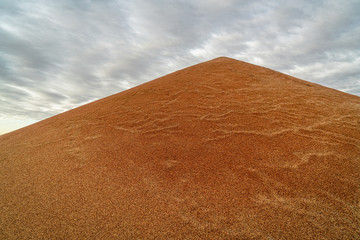 pile of sorghum grain in Kansas