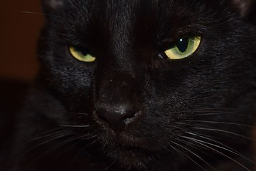 close up on head of black cat yellow eyes