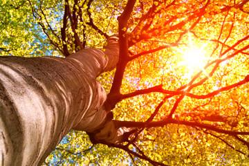 Sonnenstrahlen scheinen durch Baumkrone