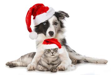 Hund und Katze mit Weihnachtsmützen