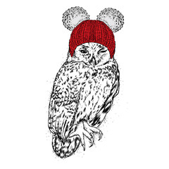 Funny owl in a winter hat. Vector illustration. Bird in clothes.
