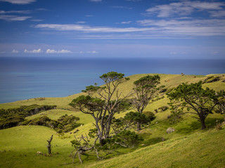 Wall Mural - New Zealand landscape green hills and sea