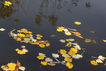 autumn leaves floating on fast river