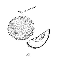 Hand Drawn of Ripe and Sweet Melon